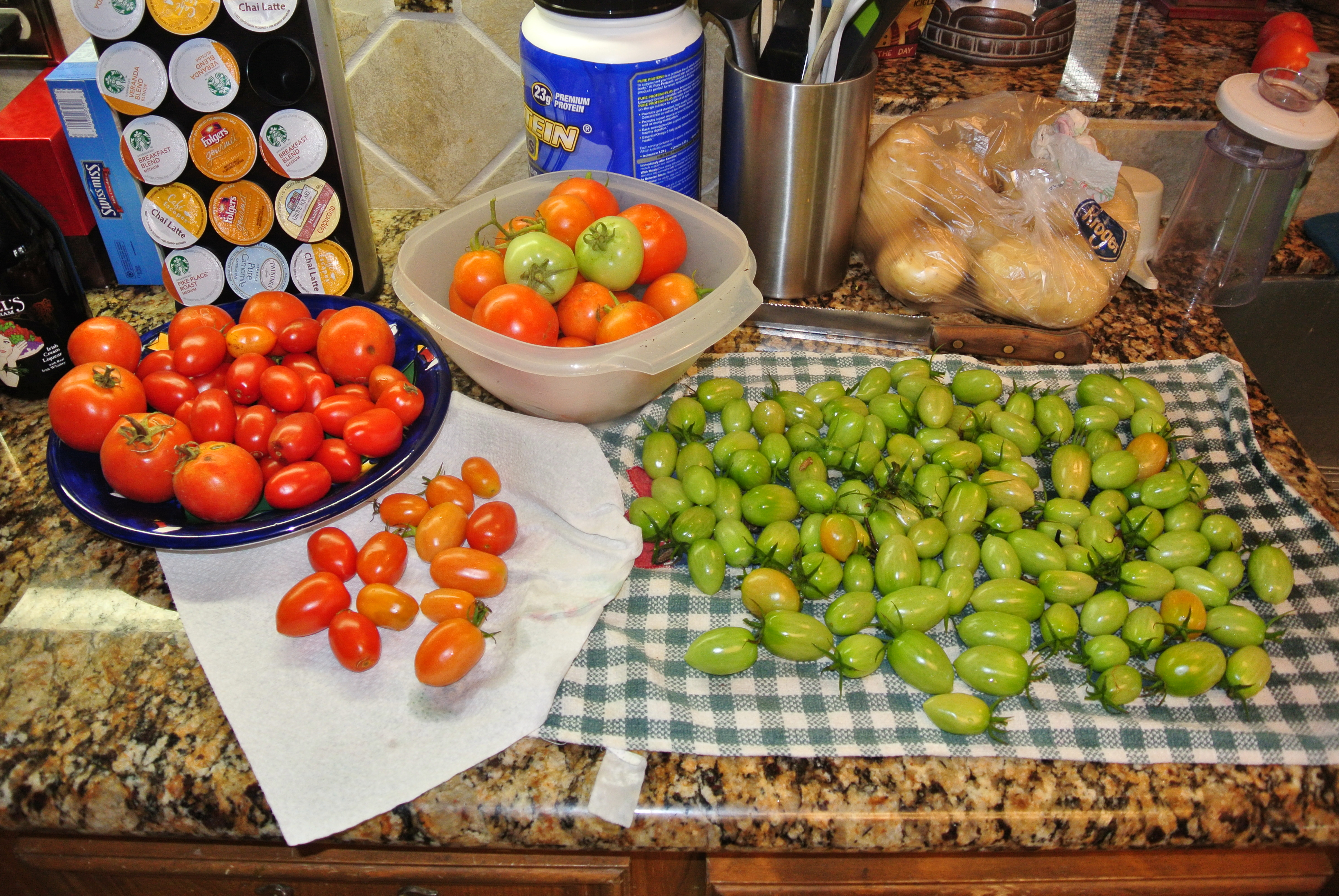 The tomatoes rescued and brought in on Christmas Day. Hope to ripen the green ones