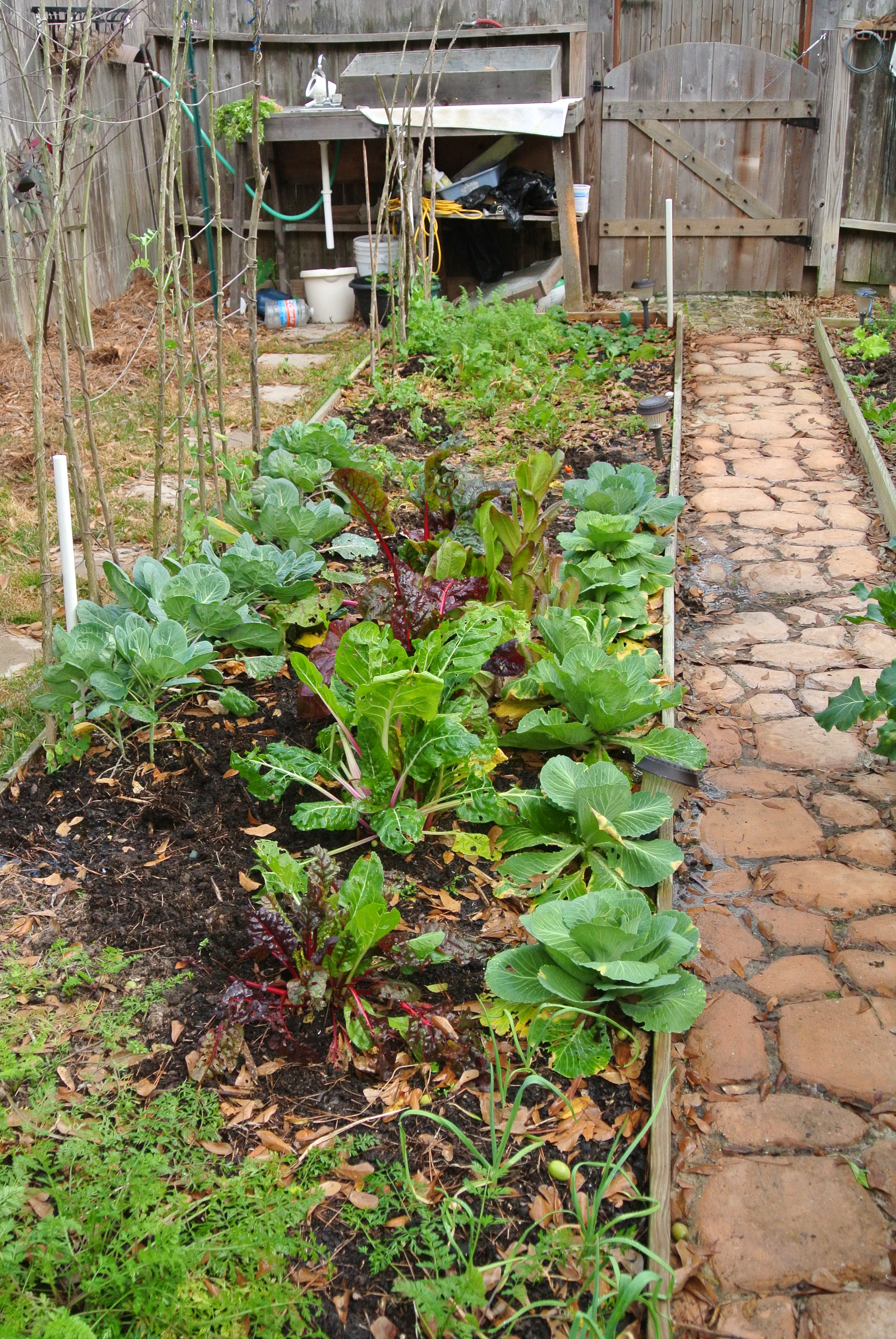 A view down my newest bed...redone a year ago.Lettuce, Chard, cabbage, peas, carrots, brussel sprouts, turnips, garlic and a few beets.