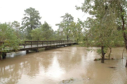 The creek by the soccer field during a flood event a couple of years ago. Normally you stand by tree in the foreground on the bank.