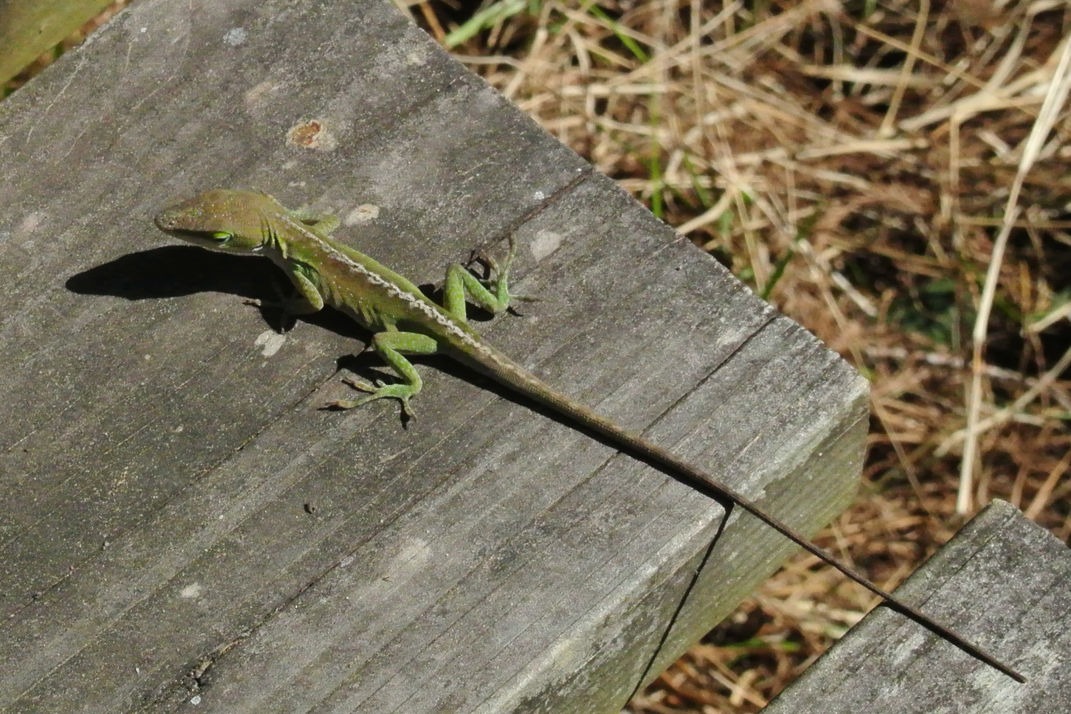 One of the other critters spotted on the fishing dock