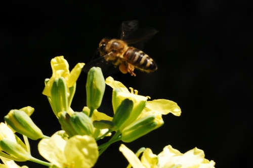Off to another one. Trying to improve my moving critter skills. My goal is get a crisp shot of the bee flying!