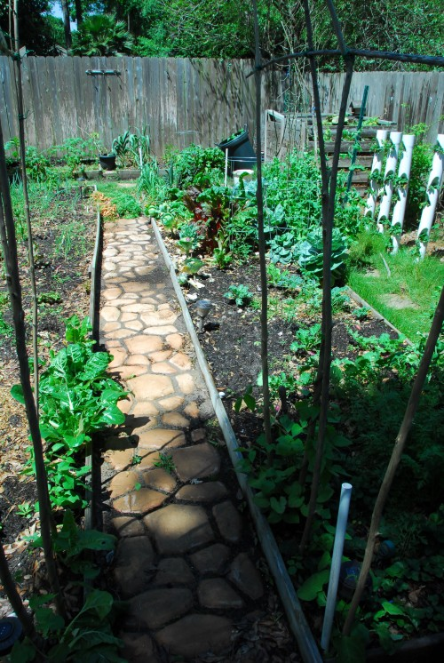 A look down the garden path toward the back beds. The poles in the foreground arch up over the entrance and soon will be covered in 3 varieties of pole beans.