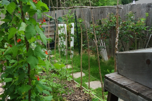 A look back toward my compost bins and strawberry towers
