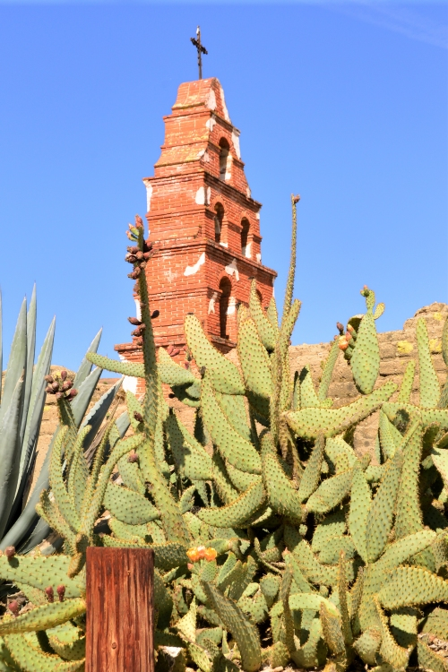 A look at an old tower behind the giant prickly pear cactus. South end of Mission grounds.