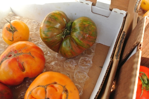 I wish I could get my heirlooms to grow this beautifully. Jan had the green striped variety with her lunch on the pier in Malibu.