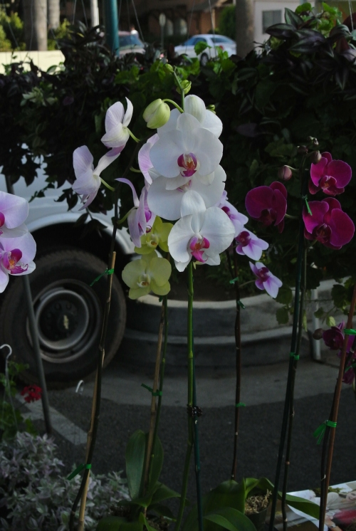 Orchids - so beautiful!