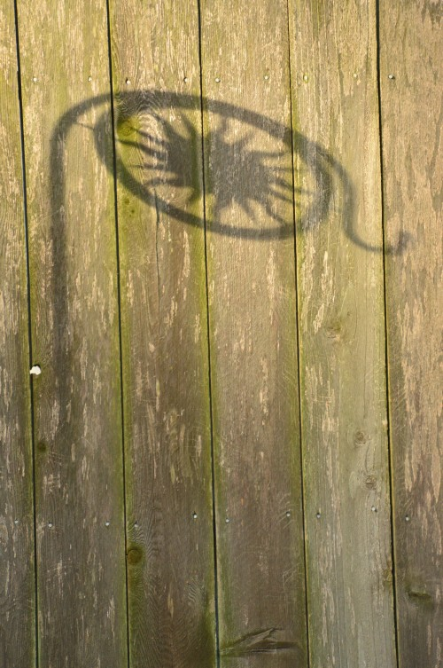 Casting shadows on the fence