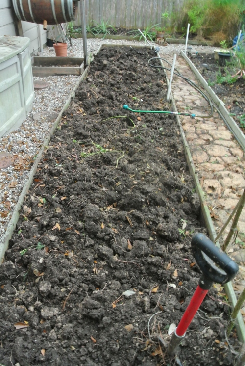 The old sweet potato bed - cleaned out and what next ????