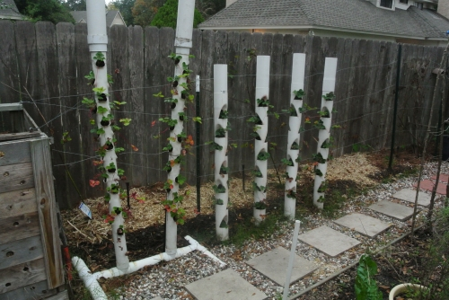Strawberry towers planted with about 85 of the 100 new plants.