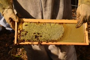 Honey....being added to a frame.