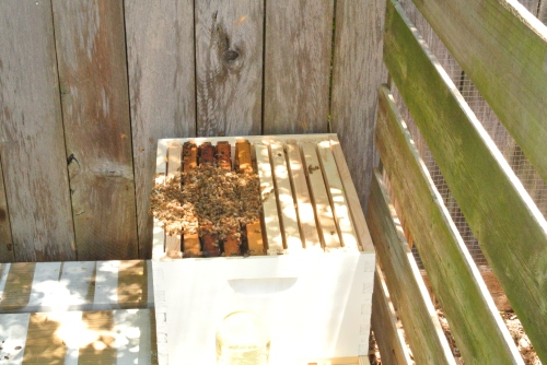 My new hive and the new occupants.
