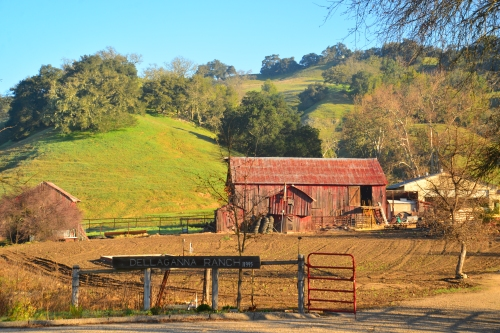 On the western slope heading into Paso Robles was a tidy barn near a ranch house.