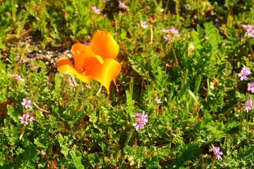A single bloom