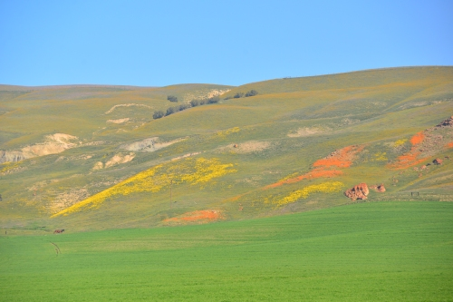 The hillside with splotches of color.