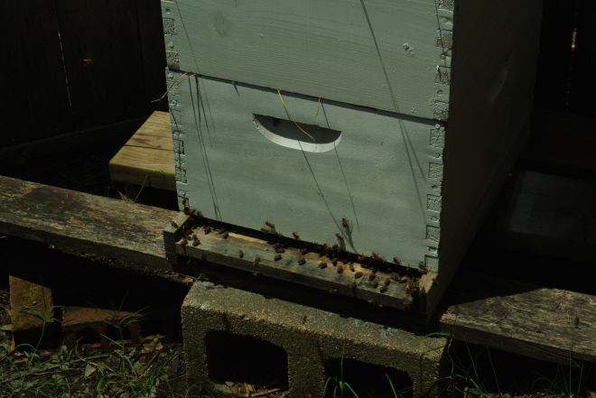 Base entrance to the hive...very busy and they seem to be enjoying a sunny day without rain! Me too!
