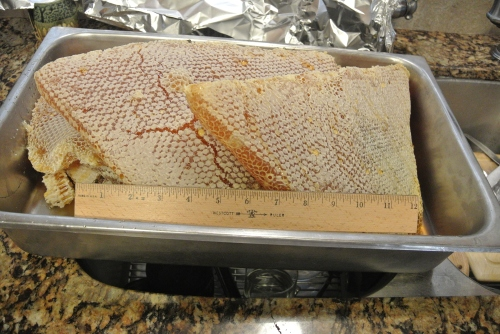 A nice pan full of lovely honey comb. It was a heavy haul.