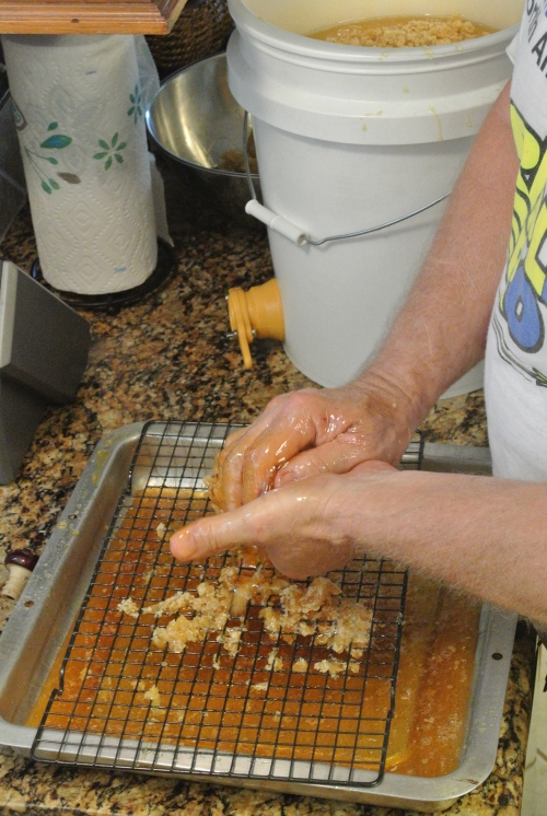 Here is a shot of me squeezing the honey from the wax. I would squeeze and  compact the was as tight as I could. I then place it out near the hive and  the next several days it is wild watching the bees from the neighborhood clean the wax.