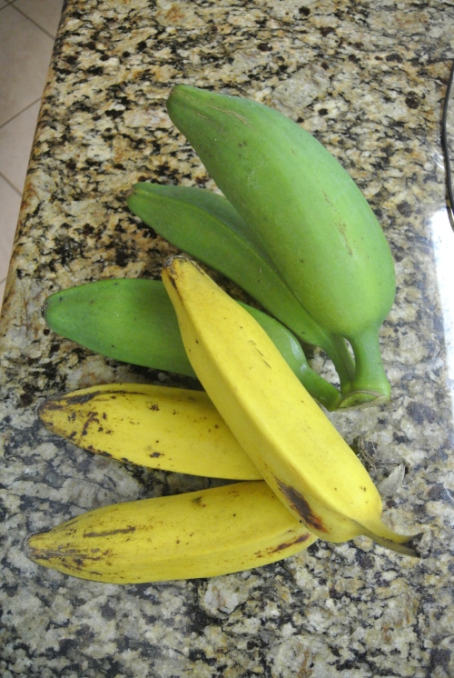 Several ripe ones with the most recently cut.