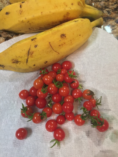 Cherry tomatoes and a few ripened bananas. Time to cut a few more! Very sweet and very tiny.