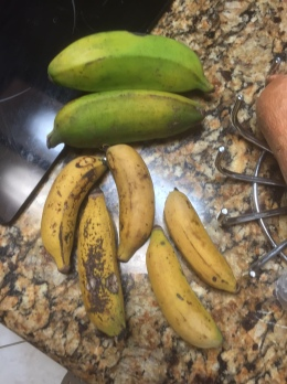 Two Burro bananas still ripening and 5 ripe Manazano bananas ready to eat.