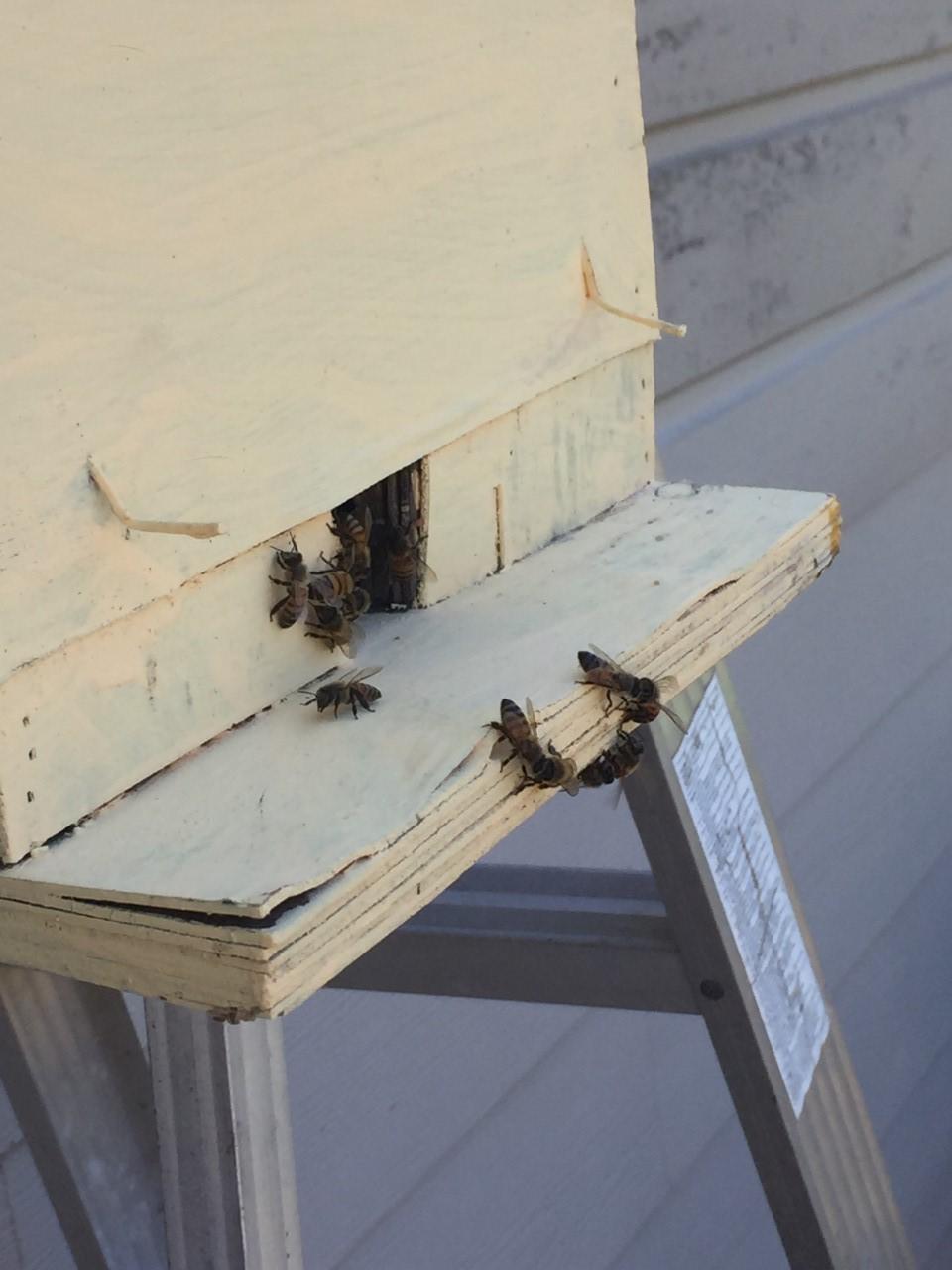 Swarm Box thumbnail_IMG_3999